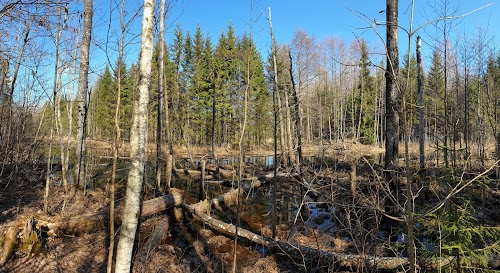 Koprarada - Beaver Trail
