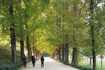 Metasequoia-lined Road, Damyang-gun, South Korea