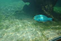 Bleu Ocean, Saint-Leu, Reunion Island