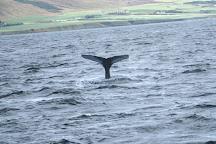 Keli Sea Tours, Akureyri, Iceland