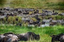 Serengeti National Park, Arusha Region, Tanzania