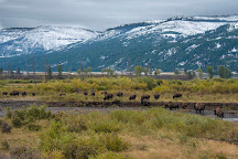 Yellowstone Guidelines, Livingston, United States