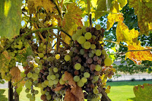 Mercer Wine Estates, Prosser, United States