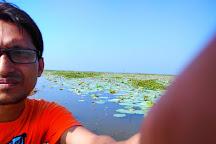 Baikka Beel Wetland Sanctuary, Sreemangal, Bangladesh