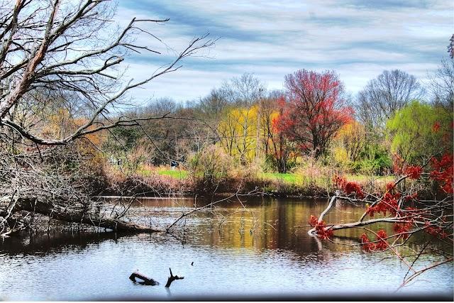 Ambassador's Pond