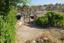 Joshua Tree Ostrich Ranch and Guest House, Dolan Springs, United States