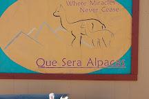 Que Sera Alpaca, Santa Fe, United States