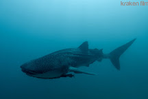 Kraken Divers, Cabo San Lucas, Mexico