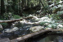 Border Ranges National Park, Wiangaree, Australia