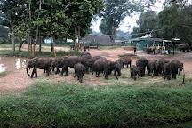 Elephant Transit Home (ETH), Udawalawe National Park, Sri Lanka