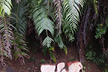 Moorea Fun Dive, Hauru, French Polynesia