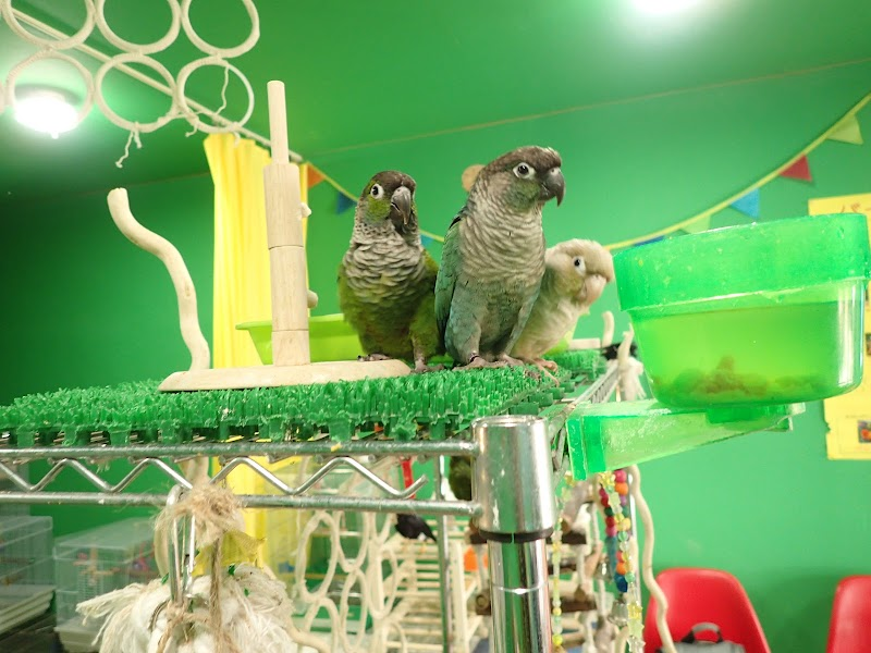 PARROT CAFE