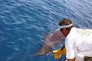 JP Sport Fishing Tours