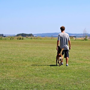 Fidog educazione ed addestramento del cane - Dog sitting