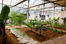 Emirates Bio Farm, Emirate of Abu Dhabi, United Arab Emirates