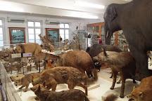 Le Musee d'Histoire Naturelle Victor Brun, Montauban, France