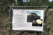 Goodsell Ridge Preserve, Isle La Motte, United States