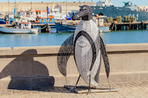 Penguin Catamaran Tours, Luderitz, Namibia