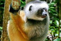 Zahamena National Park, Ambatondrazaka, Madagascar