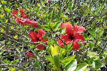 Faial Botanic Garden, Horta, Portugal