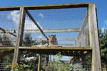 Borth Wild Animal Kingdom, Borth, United Kingdom