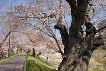 Akutagawasakurazutsumi Park, Takatsuki, Japan