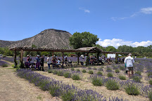 Purple Adobe Lavender Farm, Abiquiu, United States