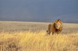 LionSky