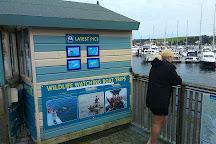 Orca Sea Safaris, Falmouth, United Kingdom