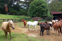 Twin Oaks Riding Ranch, Whitianga, New Zealand