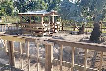 Pinto's Farm, Miami, United States