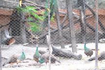 Samutprakan Crocodile Farm and Zoo, Bangkok, Thailand