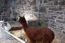 Ark Open Farm, Newtownards, United Kingdom