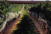 Auburn Road Vineyard & Winery, Pilesgrove, United States