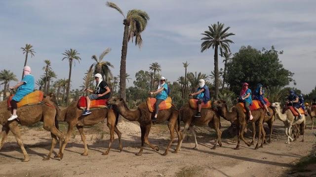 Chameau Marrakech