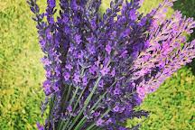 Lockwood Lavender Farm, Skaneateles, United States
