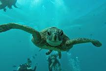 Sea Turtle Camp, Wilmington, United States