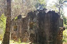 Bindarri National Park, Upper Orara, Australia