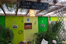 Bodega San Juan - Museo del Vino, Santa Brigida, Spain