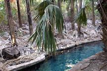 Mataranka Thermal Pool and Rainbow Springs, Mataranka, Australia