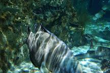 Sea Life, Serris, France