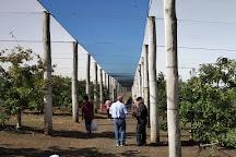 TNT Produce, Bilpin, Australia
