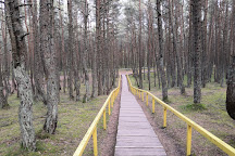 Dancing Forest, Rybachy, Russia