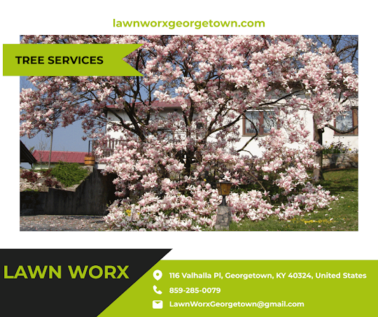 Lawn Care Landscape Tree Services in Georgetown