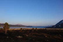 BrimiSkogen, Lom, Norway