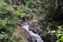 Valle Escondido Preserve, Monteverde, Costa Rica