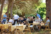MERCOURI ESTATE S.A. - ΚΤΗΜΑ ΜΕΡΚΟΥΡΗ Α.Ε., Pyrgos, Greece