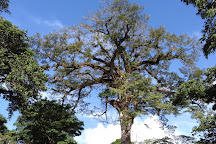 Domaine Pascaud, Remire-Montjoly, French Guiana