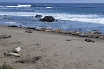 Friends of the Elephant Seal Visitor Center and Gift Shop, San Simeon, United States