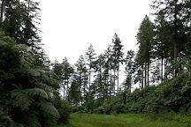 Tikitapu Nature Walk, Rotorua, New Zealand